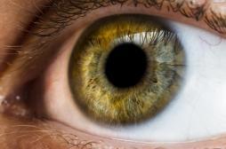 L'intelligence peut-elle se mesurer dans les pupilles ?
