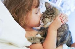 Maladie des griffes du chat : 40% des félins domestiques sont vecteurs de la bactérie