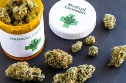 Cannabis thérapeutique: la plupart des médecins qui en parlent à leurs malades ne savent pas si ça fonctionne