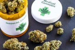 L'usage du cannabis thérapeutique sera finalement testé en France d'ici janvier 2021