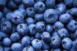 Alimentation : mieux vieillir grâce aux myrtilles
