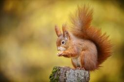 Stress: nous avons un point commun avec l'écureuil en hibernation
