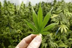 Deux boutiques de cannabis vont ouvrir leurs portes à Nancy et Metz