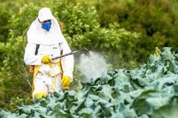 Les pesticides augmenteraient le risque de problèmes cardiaques