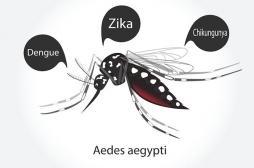 Un cas de dengue diagnostiqué près de Bordeaux : quels sont les risques ?