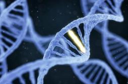 Notre exposition aux radiations entraîne une mutation génétique chez nos enfants