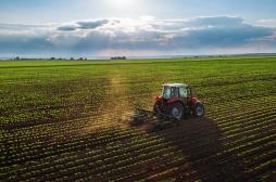 Des fongicides utilisés dans l'agriculture sont toxiques pour l'homme
