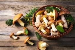 Contre le cancer, mangez des champignons