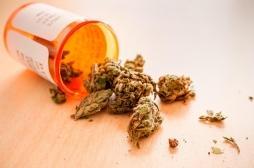 Santé mentale : il n'y a pas assez de preuves sur les bienfaits du cannabis thérapeuthique