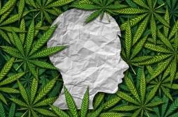 Non, le cannabis ne soulage pas la douleur chronique