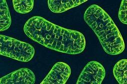 Trop de sel perturbe l'activité des cellules immunitaires