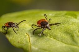 Creuse : la justice reconnait pour la première fois la maladie de Lyme comme pathologie professionnelle