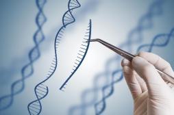 Bébés génétiquement modifiés : l'OMS se prononce contre