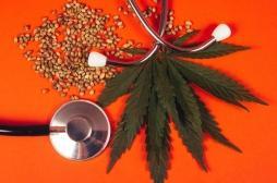 Des élus s'engagent pour le cannabis thérapeutique : sur quelles études se basent-ils ?