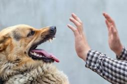 Rage : une personne en meurt toutes les 9 minutes, faites vacciner vos animaux