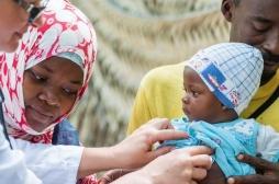 Paludisme : une plante génétiquement modifiée pourrait sauver des millions de vies