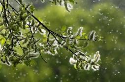 Allergies aux pollens : faut-il s'attendre à ce qu'elles durent tout l'été ?