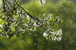 Allergie aux pollens : et si vous optiez pour la désensibilisation ?