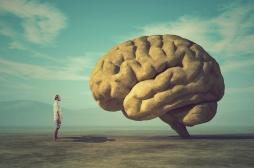 Notre cerveau a évolué au point de préférer la parole et la musique au bruit
