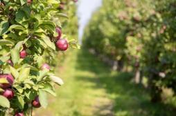 Pesticides : la maladie de Parkinson d'un arboriculteur reconnue comme professionnelle