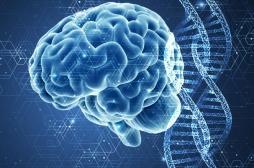 Le secret de la longévité : un gène qui protège contre le stress !