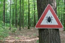 Bientôt un vaccin pour la maladie de Lyme ?
