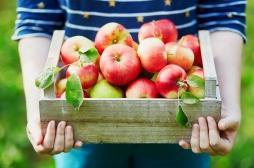 Les pommes bio sont excellentes pour notre microbiote