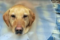 Téléthon : controverse sur la recherche animale