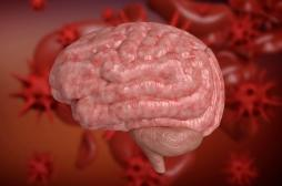 Comment l'intestin protège le cerveau contre les infections