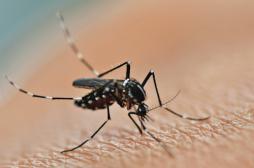 Zika : un cas suspect dans le Bas-Rhin