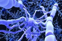 Et si l'on pouvait réparer les fibres du système nerveux central ?