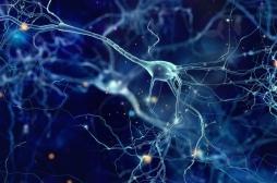 Prématurés : l'hypoxie ne tue pas les cellules du cerveau