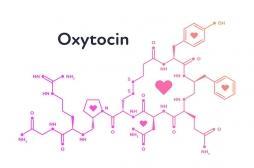 """Il existe un possible lien entre """"l'hormone de l'amour"""" et l'ostéoporose"""