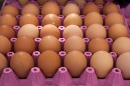 Fipronil : la fraude des œufs contaminés remonte à un an