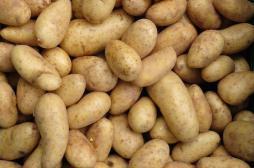 Diabète : manger trop de pommes de terre augmente les risques