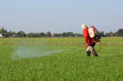 Pesticides : le nombre des agriculteurs français exposés sous estimé