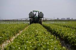 BPCO : les enfants exposés aux pesticides plus à risque à l'âge adulte