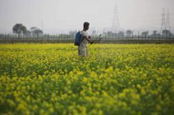 Pesticides : Ségolène Royal veut renforcer la réglementation