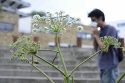 Allergie : le risque de niveau 5 pourrait s'étendre