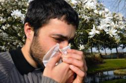 Allergies : les pollens de graminées passent à l'attaque