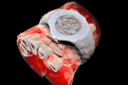 Nouvelle-Zélande: des scientifiques réalisent la première radiographie en 3D et en couleur