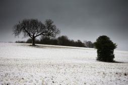 Notre activité cérébrale varie selon les saisons