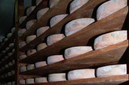 Listeria : 600 meules de morbier rappelées en Europe