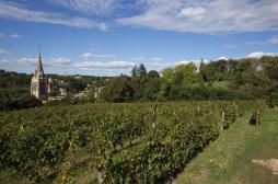 Pesticides : la fille d'un viticulteur du Bordelais porte plainte contre X