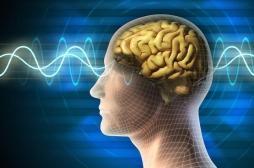 Hallucinations : comment le cerveau tente de les déjouer