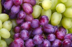 Alzheimer : manger du raisin pour prévenir la maladie
