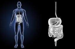 Ce parasite imite des protéines pour mieux infecter le tube digestif