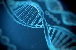 Première mondiale : le mecano des gènes directement dans le corps du malade