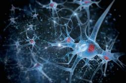 Sens de l'orientation : découverte des neurones