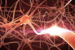 Maladie de Parkinson: la piste auto-immune évoquée